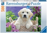 Puzzle Golden Retriever, 500 Piese Ravensburger