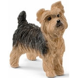 CAINE YORKSHIRE TERRIER - SL13876