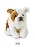 LELLY BULL DOG 23 CM