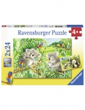 Puzzle Koala Si Panda, 2X24 Piese Ravensburger