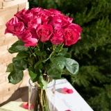 Cutie trandafiri, 11 fire, cyclam Pink Floyd