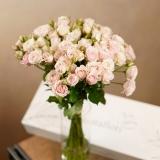 Cutie trandafiri, 11 fire, Spray Roses roz pal