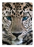 Caiet A5 My.Book Flex dictando 40 file coperta Leopard cu elastic negru Herlitz