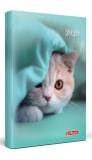 Agenda Herlitz A5 zilnica datata Little Cat 2020