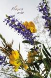Calendar Flowers 2020